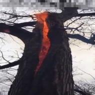 【自然災害】山火事発生のメカニズムが遂に判明する・・・ 動画有り