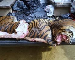 【閲覧注意】安定の中国w虎の肉を計り売りで販売してるぞ・・・ 画像あり