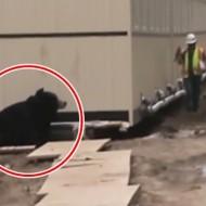 【おもしろ】曲がり角曲がったら熊と遭遇するドッキリが完全にやりすぎな件www