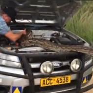 【衝撃映像】車が動かないからボンネット開けたら巨大生物が住んでた・・・