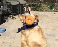 【犬】動物でも運動神経の良し悪しが分かるのがコレwこのワンちゃん鈍くさ過ぎるw