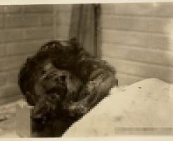 【グロ画像】遺体修復する職人技が怖くも神がかってる件 グチャグチャ顔面がここまで修復できました ※閲覧注意