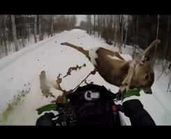 【肉片】動物跳ねた場面をスローで見たら肉片飛び散らしながら吹き飛んでいった・・・ ※グロ動画