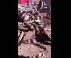 【グロ動画】人間を鳥葬するシーンって見たことある??