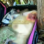 【女死体】スーツケースからおっぱい出てる!喜んで開けたらバラバラ死体だった時の衝撃は表現しきれない ※グロ画像