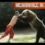 【グロ動画】熊と1対1で戦ったら食い殺されたから10人で戦ってみた・・・