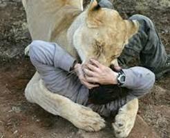 【超閲覧注意】ライオンの檻に入った自殺志願者が食い殺される一部始終