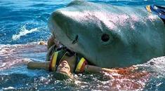 【グロ注意】ビーチに現われた4mのサメ・・・に食べられた人がこちら・・・