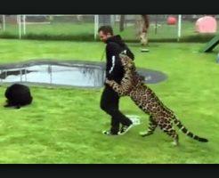 【閲覧注意】肉食獣「ジャガー」に襲われた人間のありえない姿