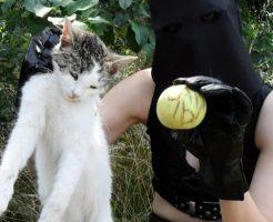【※超閲覧注意】マジキチ女が猫の首ねじ切って死体解体して剥製にするまでの記録・・・・・・ ※グロ動画