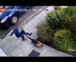 【衝撃映像】5歳の男の子が蹴るわ投げるわしてる「オモチャ」が生きたネコ ※閲覧注意