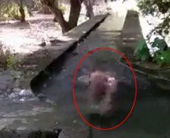 【無修正 自殺】ドM男が素っ裸で入水自殺したら・・・もがき苦しみながら勃っとるんやないか? ※動画