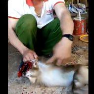 【グロ動画】まだ生きてる猿の頭をナタでザックリ…フレッシュな脳みそプリンを食す人々