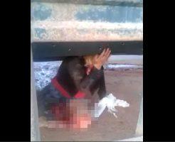 【グロ動画】美脚ねーちゃんがトラックに轢かれて脚もぎ取られたけど辛うじて生きてる 閲覧注意