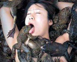 【エログロ】あかん続き気になってしゃーない。全裸の女がカエルまみれで悶てるんだが・・・ 画像