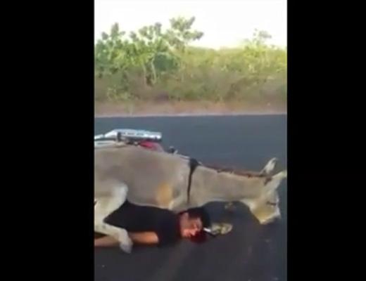 【獣姦?動画】どうしてこうなった?血を流しながらロバからバックでヤラれている男ww