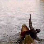 【閲覧注意】人間が巨大ワニに喰い殺される瞬間が撮影される・・・