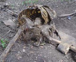 【グロ動画】人間の死体が自然に分解されるまで観察してみた