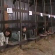 【エログロ】人間家畜の作り方ってぶっ飛んだ内容のAV作ってるのがまさかの日本www