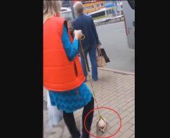 【おもしろ映像】ロシア女性「これ私のペット!」住民A「嘘やろ・・・何を散歩させてんねん」→結果