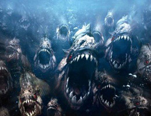 【閲覧注意】ピラニア千匹単位でいる川に肉を投げると・・・ところでこの肉何?人間・・・? 動画