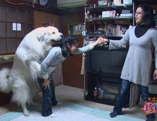 【獣姦】JCに発情して腰振る犬wwwwwwwwwwwwwwwwwwwww