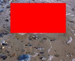 【UMA】コマ!?海岸に打ち上げられた死体が人魚にしか見えないんだが・・・ ※動画