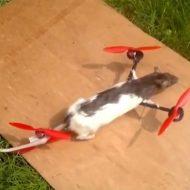 【衝撃映像】サヨナラ・・・死んだペットをヘリコプターにしてあの世へ送る新儀式!