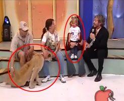 【放送事故】生放送 × ロリ幼女 × 放し飼いのライオン → これは盛大なフラグ立てですわw