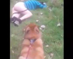 【本物レ●プ】飼い犬が泥酔美女を発見!アナ掘れワンワンwww