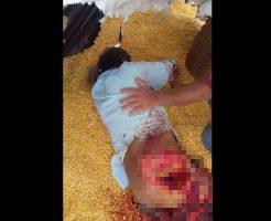 【グロ動画】脱穀機に下半身に巻き込まれた人ってどうなるか知ってる?両足ズタズタでをお肉を脱穀された模様w ※閲覧注意