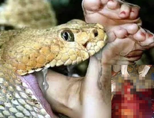 【閲覧注意】つちのこみたいなヘビを捕まえて腹を切り裂いた結果→ヌルヌルになって死んでる少女が出てきたやが・・・ ※グロ画像