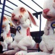 【動物実験】人間様の為に実験場で働いてる動物さん達を紹介するぜ!施設内映像がかなり辛すぎてワロタ・・・ ※グロ動画