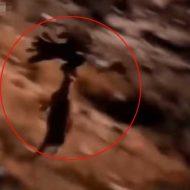 【おもしろ】鷲さんすげぇわ!自分より大きいヤギさんを拉致して飛んで行ってしもうたわwww ついでに人間拉致ってるやんけw ※動画あり