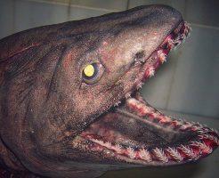 【閲覧注意】怖すぎぃ!!こんなん遭遇したら絶望しかないw深海魚ギャラリー