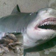 【人食いサメ】人食ってたサメ捕獲したから腹掻っ捌いて中身隠してみた結果→消化されかけの人の死体が出てきたんやが・・・ ※グロ画像