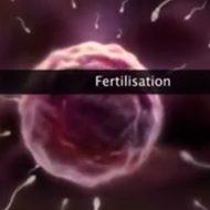 【エロ注意】んほぉおおお!受精してるのぉおお!赤ちゃんの素が卵子に突撃する動画ぐうシコw
