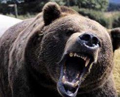 【恐怖体験】サーカスの熊さん 客席にダイブし会場内を怪我人だらけにする痛恨のミスw ※衝撃映像