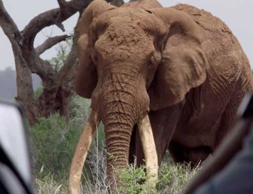 【爆発映像】動物園のゾウさんが得体の知れないもの食べてしまった結果→全身木端微塵に吹き飛んでしまう・・・※微グロ動画