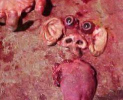【死体解体】メキシコカルテルさん 誘拐してきた少年さんの顔パーツをバラバラパズルにして晒し上げた模様・・・ ※グロ画像