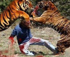 【死の動物園】トラさん達がむしゃむしゃ食べてる餌が生きてる人だった件 さっきまで生きとったのに・・・ ※グロ動画