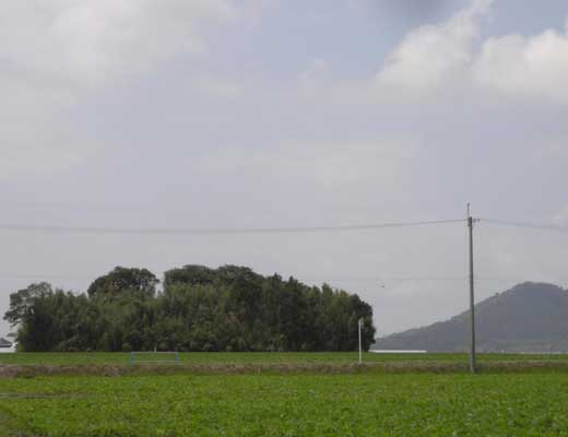 シガイの森風景写真