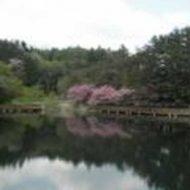【山梨県心霊スポット】すずらん池