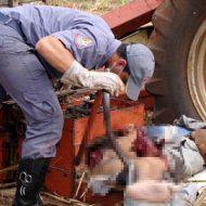 【グロ画像】サトウキビ刈る機械で人間刈り取ってみたけど何か質問ある? ※死体