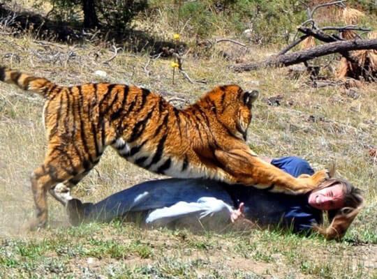 【閲覧注意】野生の殺人虎に襲われてしまった男性の最後の姿がコレ・・・