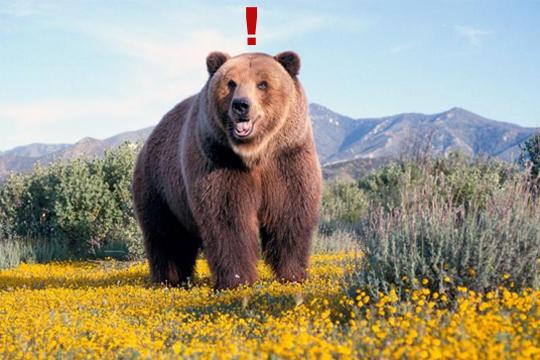 【衝撃映像】自転車乗ってたら熊が襲ってきた!熊との逃亡劇が怖すぎるw