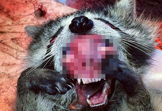 【グロ画像】肉は大好きだけど動物のこういう画像は無理・・・※閲覧注意