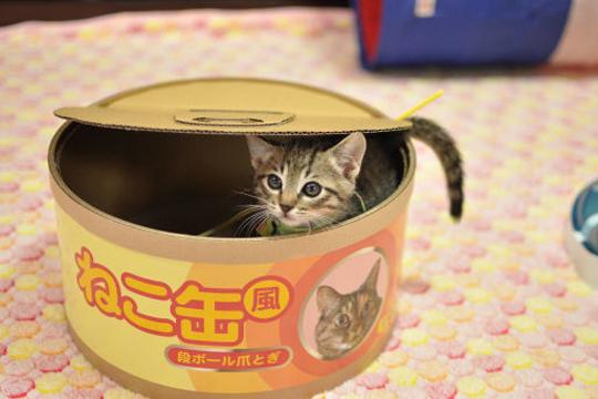 【おもしろ】缶詰に頭を入れて抜けなくなった猫を救出してみたwww