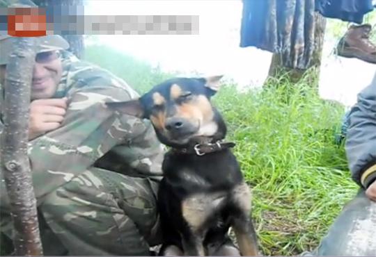 【もふもふ】獲物待ちの狩猟犬が居眠りする映像がぐうカワw