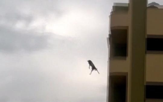 【衝撃映像】犬でも飛び降り自殺するんだな・・・これ日本かw? ※閲覧注意